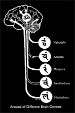 5 Tantric Brain centers related to the Chakras
